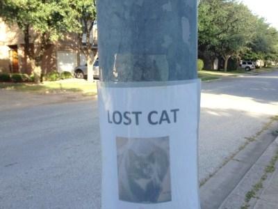 lostcat.jpg